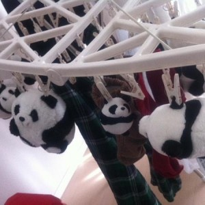 洗濯後、スタンバイ状態のパンダたち